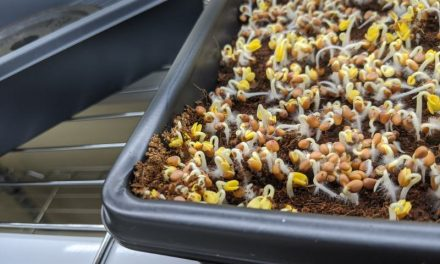 4 Best Microgreen Trays Compared