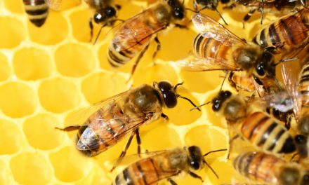 The Bees in Your Backyard: Identifying Different Types of Bees