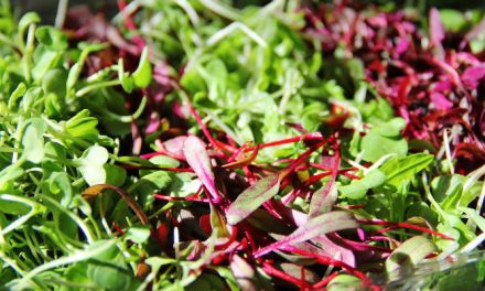 Best Growing Mediums for Microgreens